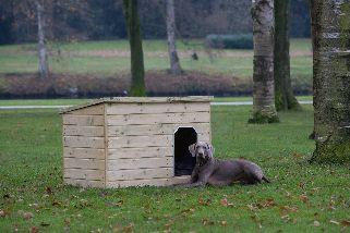 Hondenverblijf Teckel